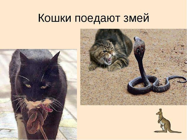Кошки поедают змей