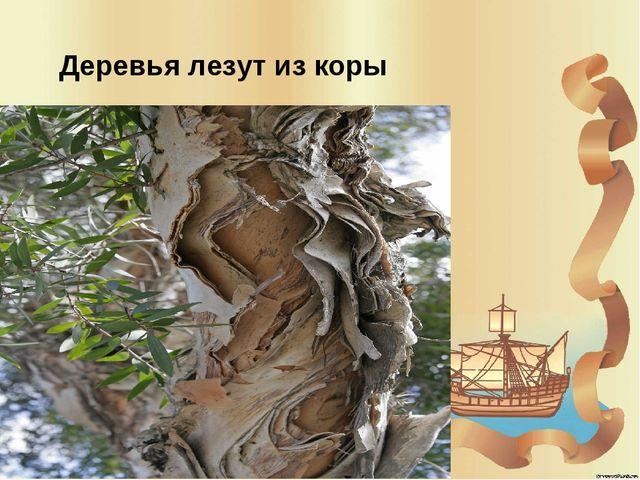 Деревья лезут из коры