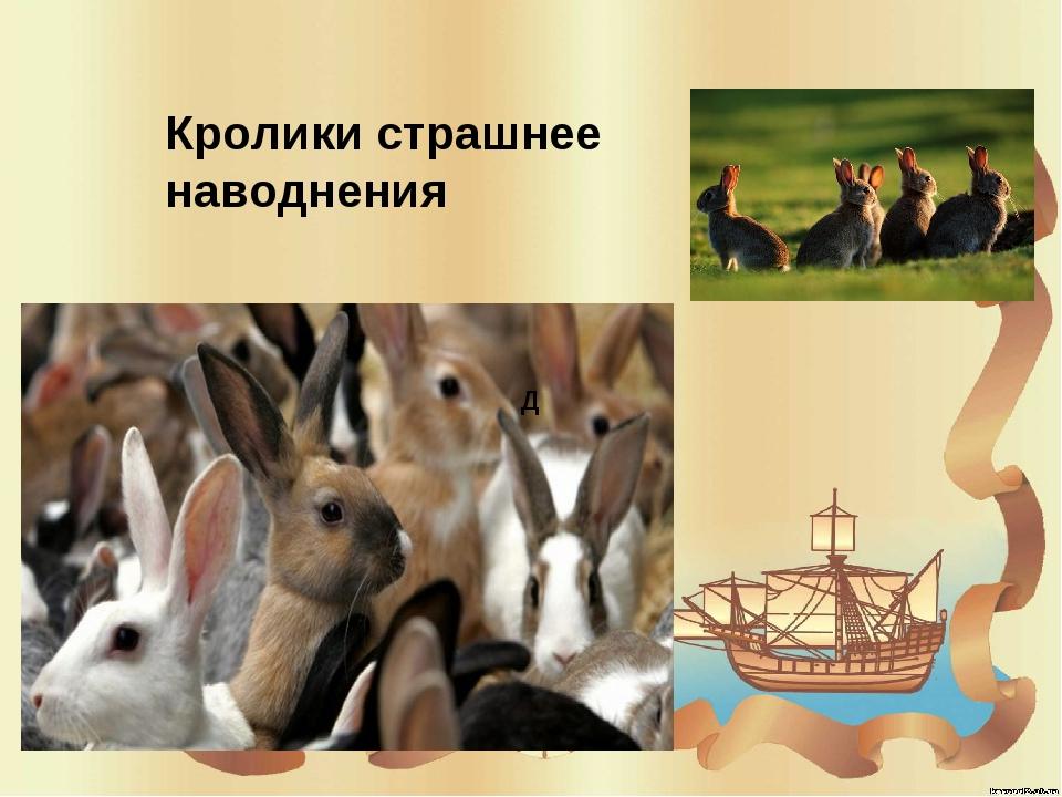 Д Кролики страшнее наводнения