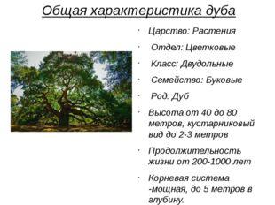 Общая характеристика дуба Царство: Растения Отдел: Цветковые Класс: Двудольны
