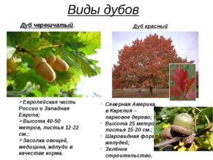 Виды дубов Европейская часть России и Западная Европа; Высота 40-50 метров, л