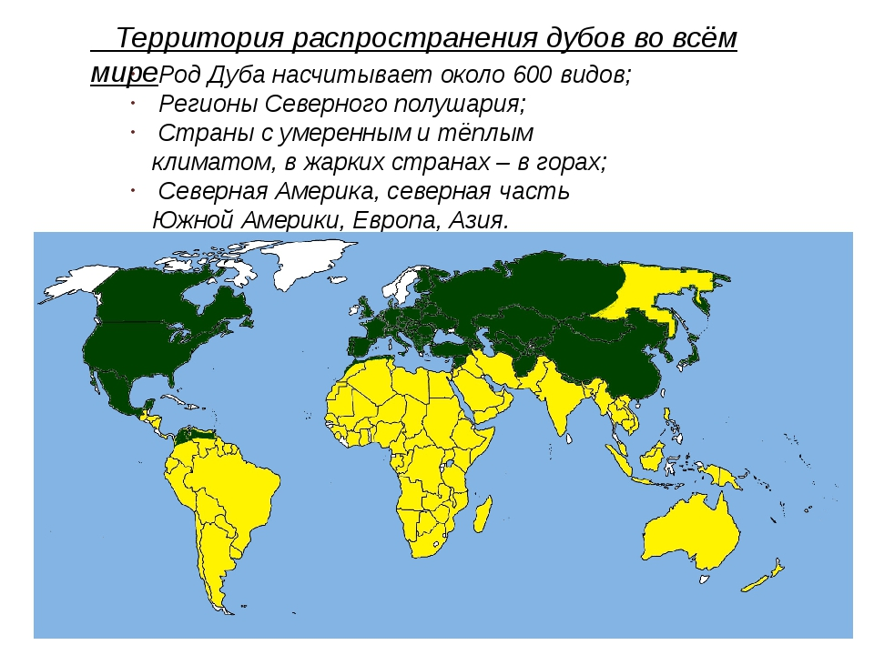 Род Дуба насчитывает около 600 видов; Регионы Северного полушария; Страны с...