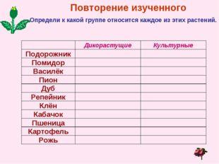 Повторение изученного Определи к какой группе относится каждое из этих растен