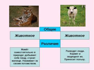 Общее Животное Животное Различие Живёт самостоятельно в природе: добывает себ