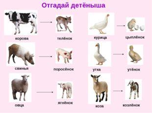 Отгадай детёныша корова телёнок свинья поросёнок овца ягнёнок курица цыплёнок
