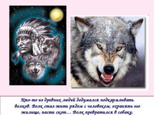Кто-то из древних людей додумался подкармливать волков. Волк стал жить рядом