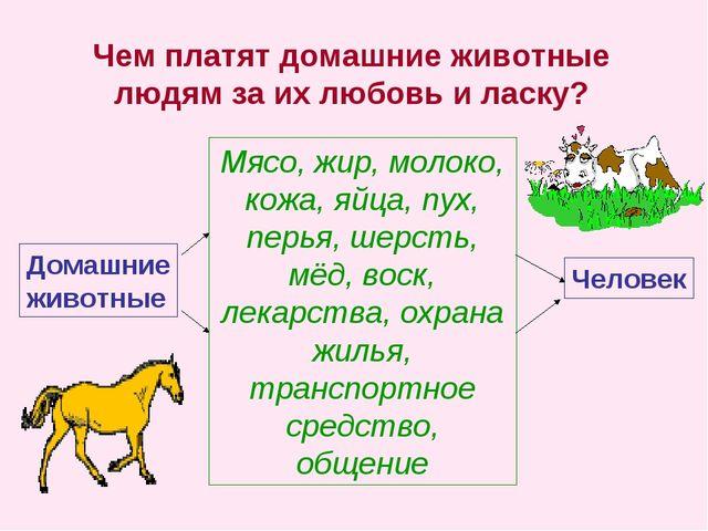 Чем платят домашние животные людям за их любовь и ласку? Домашние животные Мя...