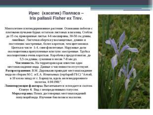 Ирис (касатик) Палласа – Iris pallasii Fisher ex Trev. Многолетнее плотнодерн