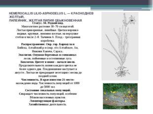 HEMEROCALLIS LILIО-ASPHODELUS L. — КРАСНОДНЕВ ЖЕЛТЫЙ, ЛИЛЕЙНИК, ЖЕЛТАЯ ЛИЛИЯ