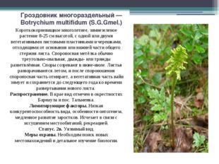 Гроздовник многораздельный — Botrychium multifidum (S.G.Gmel.) Короткокорневи