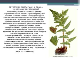 DRYOPTERIS CRISTATA (L.) A. GRAY — ЩИТОВНИК ГРЕБЕНЧАТЫЙ Многолетнее растение