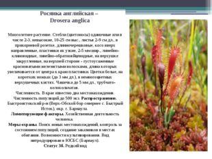 Росянка английская – Drosera anglica Многолетнее растение. Стебли (цветоносы)