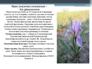 Ирис (касатик) сизоватый – Iris glaucescens Многолетнее растение до 25 см выс
