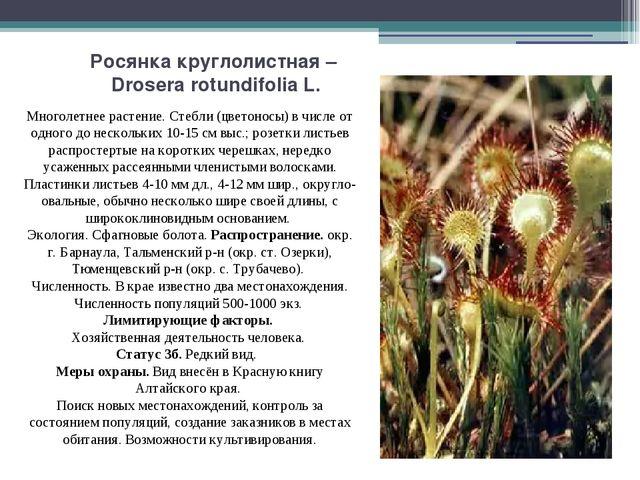 Росянка круглолистная – Drosera rotundifolia L. Многолетнее растение. Стебли...