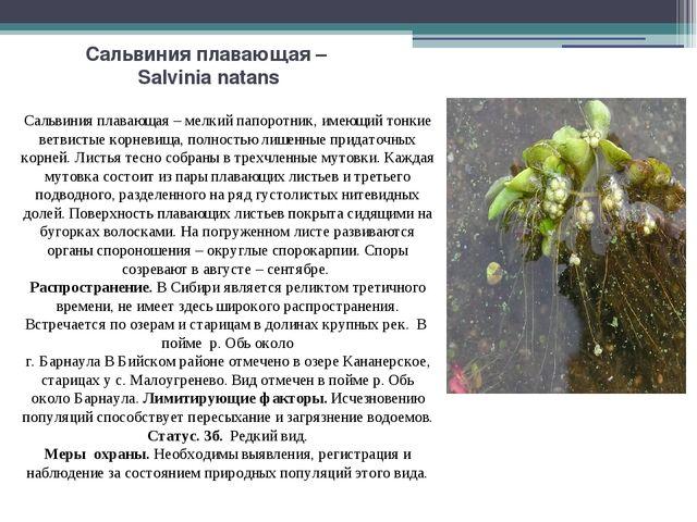 Сальвиния плавающая – Salvinia natans Сальвиния плавающая – мелкий папоротник...