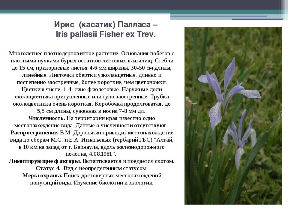 Ирис (касатик) Палласа – Iris pallasii Fisher ex Trev. Многолетнее плотнодерн...