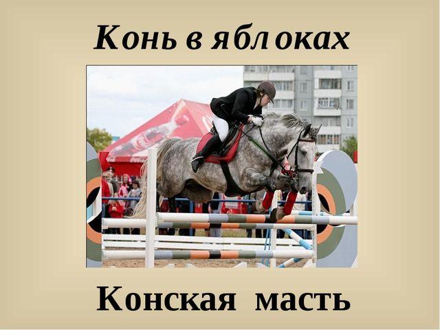 Конь в яблоках Конская масть