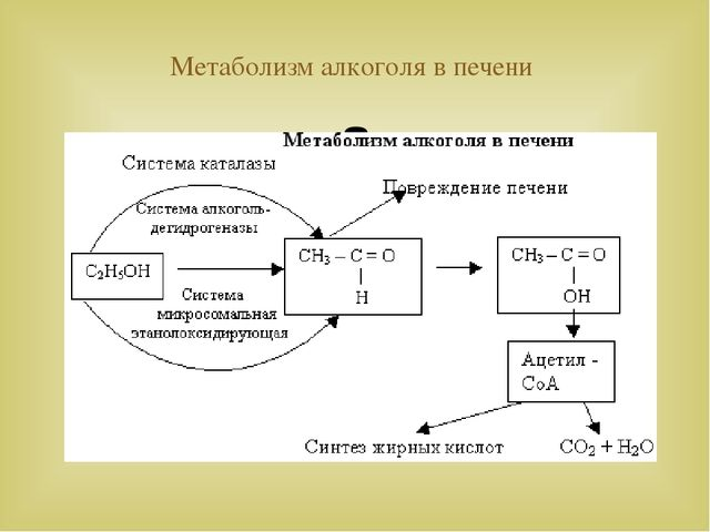 metabolism of alcohol The goal of this review is to describe the pathways responsible for the metabolism of alcohol (ethanol) and understand the factors which regulate this oxidation understanding pathways of alcohol oxidation is important because it allows us to: learn how the body disposes of alcohol and its.