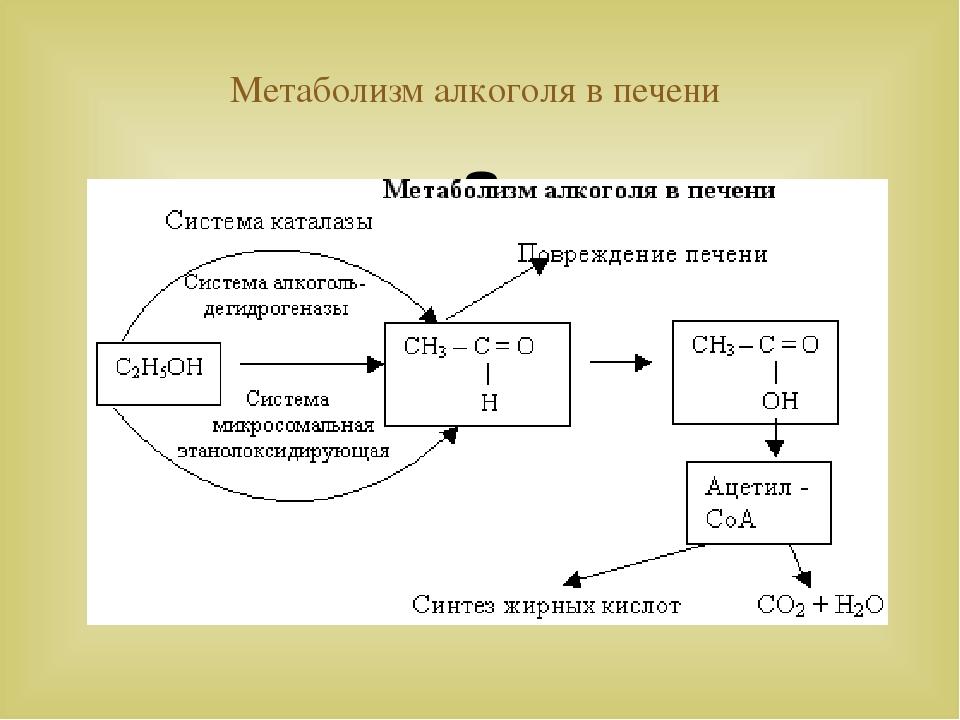 Метаболизм алкоголя в печени 