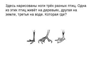 Здесь нарисованы ноги трёх разных птиц. Одна из этих птиц живёт на деревьях,