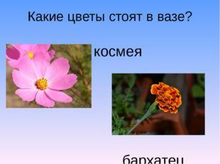 Какие цветы стоят в вазе? космея бархатец