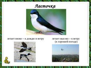 Ласточка летает низко – к дождю и ветру летает высоко – к ветру (к хорошей по