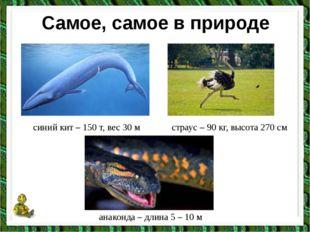Самое, самое в природе синий кит – 150 т, вес 30 м страус – 90 кг, высота 270