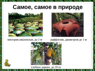 Самое, самое в природе виктория амазонская, до 2 м раффлезия, диаметром до 1