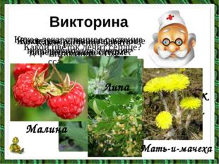 Какой цветок лечит сердце? Викторина Какое растение богато витамином «С»? Лан
