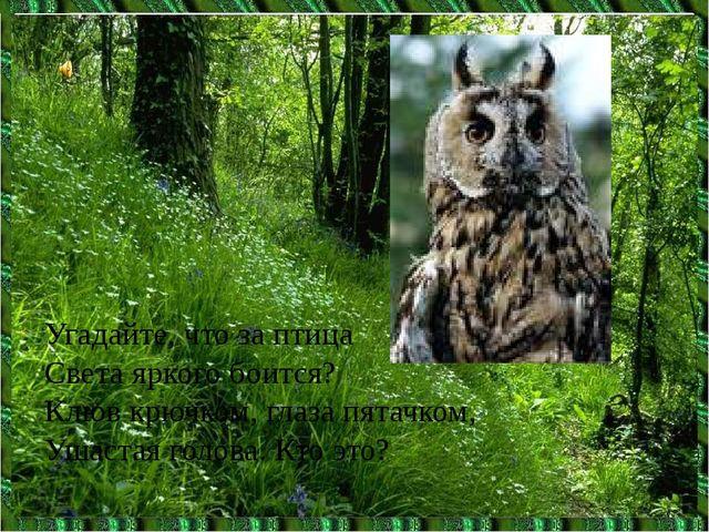 Угадайте, что за птица Света яркого боится? Клюв крючком, глаза пятачком, Уша...