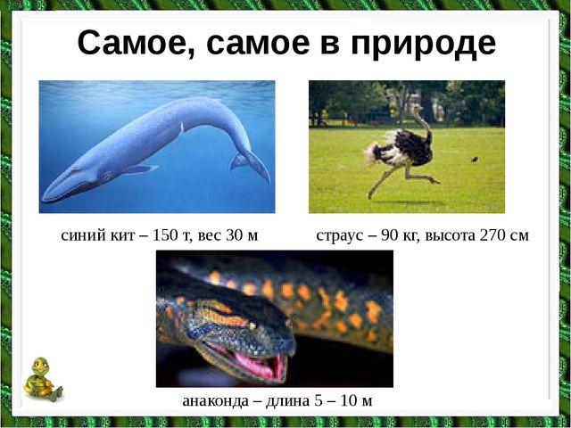 Самое, самое в природе синий кит – 150 т, вес 30 м страус – 90 кг, высота 270...