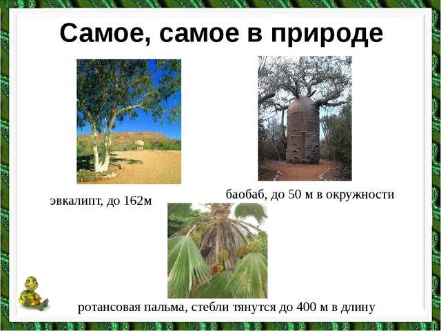 Самое, самое в природе эвкалипт, до 162м баобаб, до 50 м в окружности ротансо...