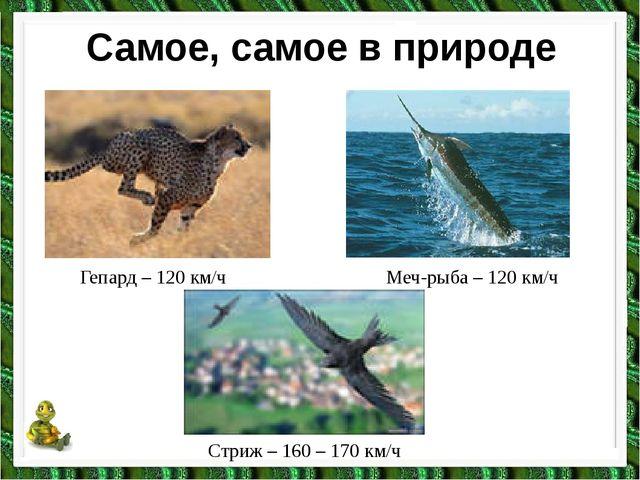 Самое, самое в природе Гепард – 120 км/ч Меч-рыба – 120 км/ч Стриж – 160 – 17...