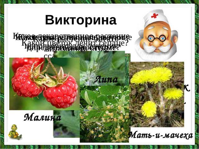 Какой цветок лечит сердце? Викторина Какое растение богато витамином «С»? Лан...