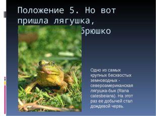 Положение 5. Но вот пришла лягушка, прожорливое брюшко Одно из самых крупных