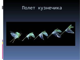 Полет кузнечика