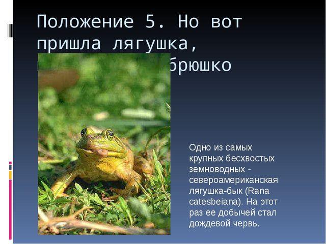 Положение 5. Но вот пришла лягушка, прожорливое брюшко Одно из самых крупных...