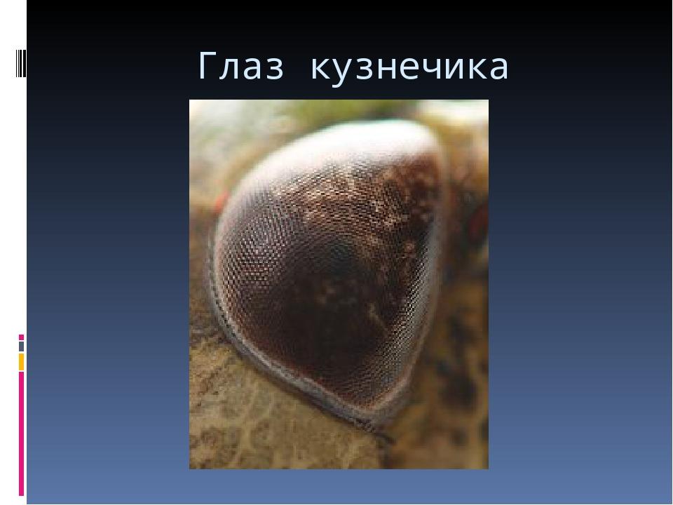 Глаз кузнечика