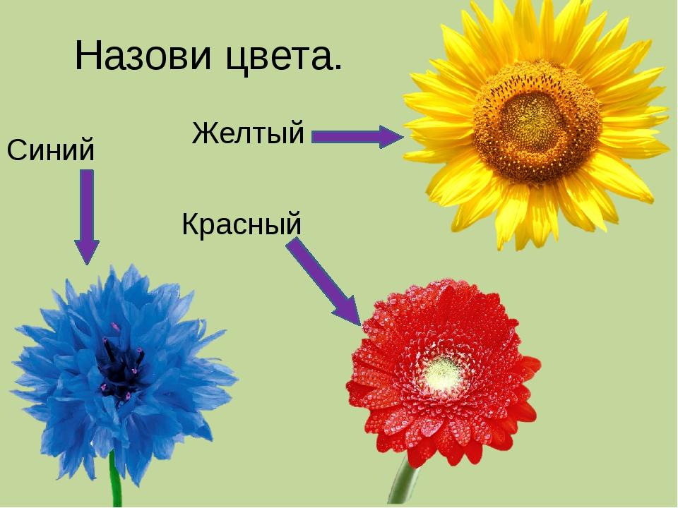 Назови цвета. Синий Красный Желтый