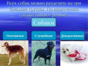 Всех собак можно разделить на три большие группы. По назначению собаки бывают