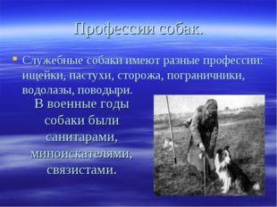 Профессии собак. Служебные собаки имеют разные профессии: ищейки, пастухи, ст