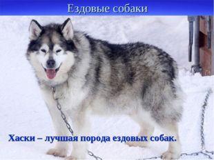 Ездовые собаки Их составляют в упряжку. Они служат одним из транспортных сред