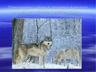 Превращение собаки в домашнее животное произошло 15 – 20 тысяч лет назад.