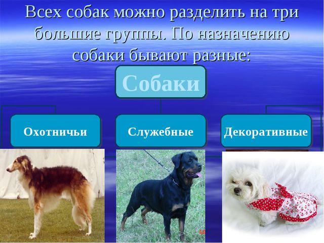 Всех собак можно разделить на три большие группы. По назначению собаки бывают...