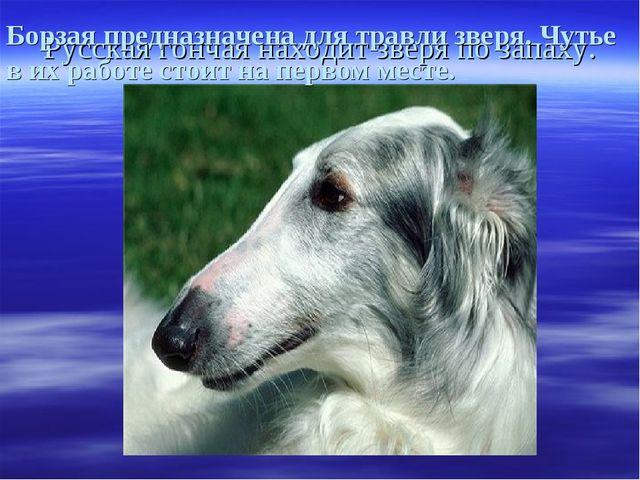 Русская гончая находит зверя по запаху. Борзая предназначена для травли зверя...