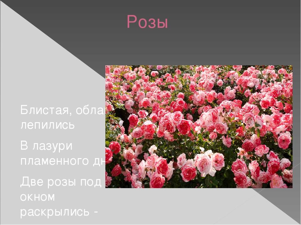 Розы Блистая, облака лепились В лазури пламенного дня. Две розы под окном ра...