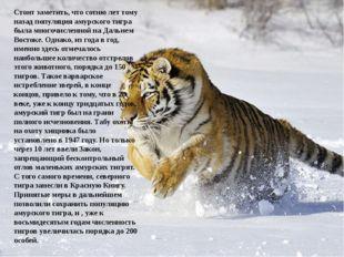 Стоит заметить, что сотню лет тому назад популяция амурского тигра была мног