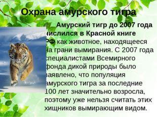 Охрана амурского тигра Амурский тигр до 2007 года числился в Красной книге РФ