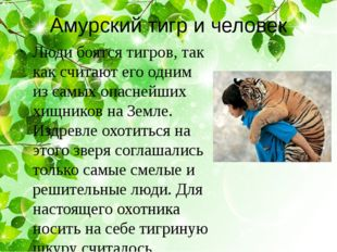 Амурский тигр и человек Люди боятся тигров, так как считают его одним из самы