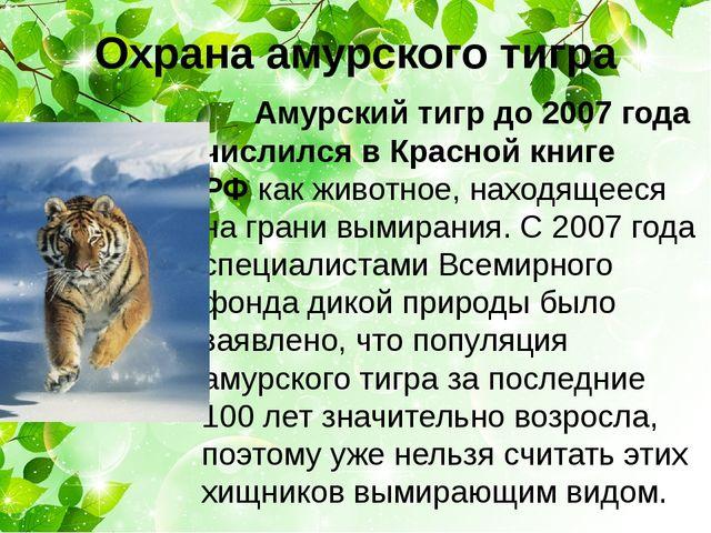 Охрана амурского тигра Амурский тигр до 2007 года числился в Красной книге РФ...